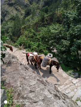サマ村に森を作るプロジェクト。